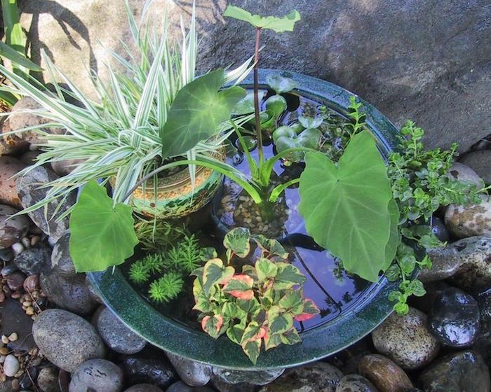 Plante aquatique jetez vous l 39 eau en 47 photos for Plante bassin exterieur
