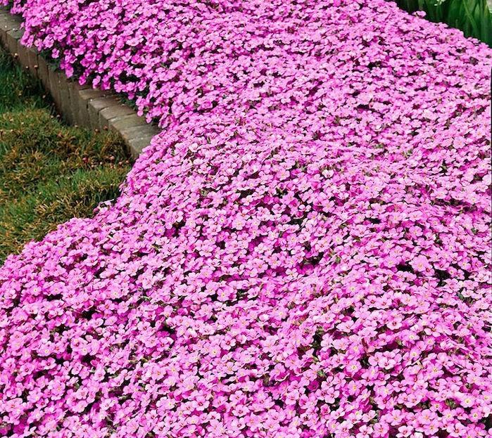 plante-pour-talus-couvre-sol-plantes-vivaces-rampantes