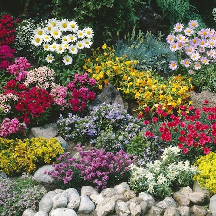 Plante couvre sol un tableau de couleurs naturelles dans for Solde plante jardin