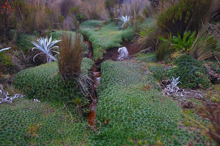 plante-rampante-plante-couvre-sol-plante-vivace-couvre-sol