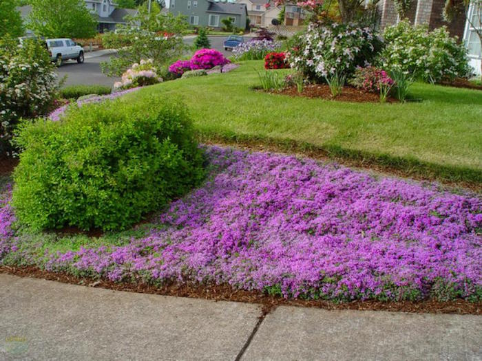 plante-tapissante-plante-couvre-sol-plantes-vivaces-couvre-sol