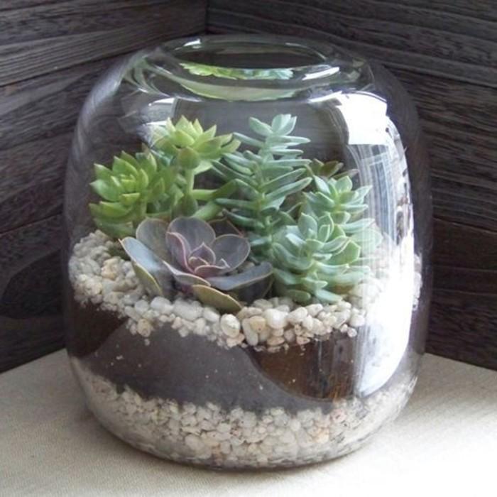 plante-terrarium-succulente-superbe-suggestion-comment-fabriquer-un-terrarium