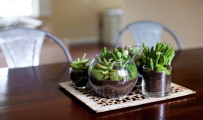plante-terrarium-succulentes-mini-terrariums-comme-decoration-pour-la-table