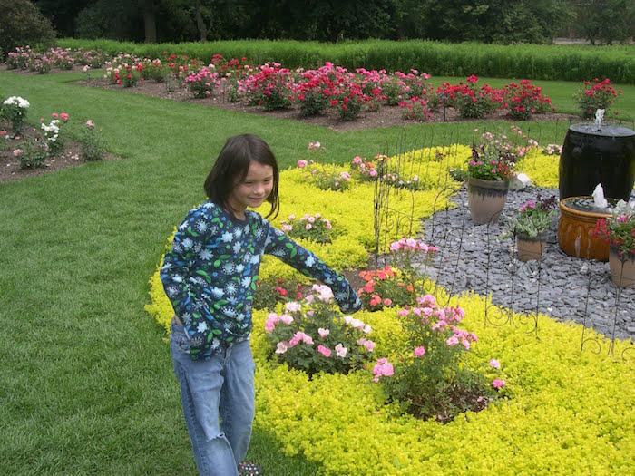 plante-vivace-couvre-sol-fleurs-couvre-sol-rampantes