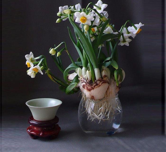 plante aquatique ikea simple deco plante interieur avec deco chambre interieur plantes vertes. Black Bedroom Furniture Sets. Home Design Ideas
