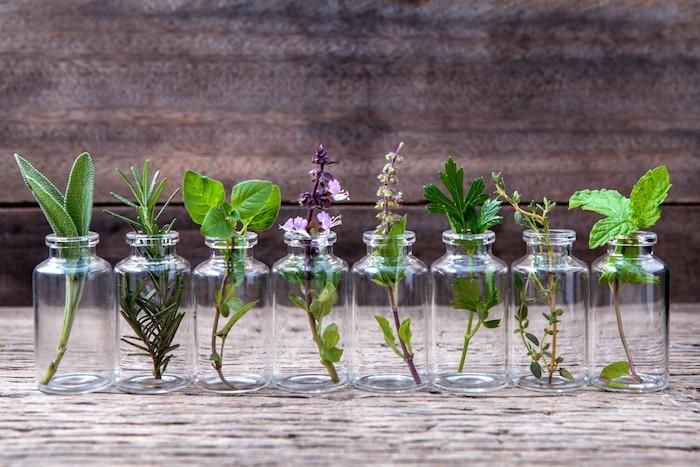 plantes aquarium plante aquatique faire pusser eau interiumjpg
