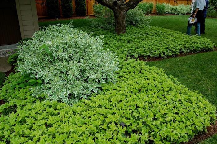 plantes-couvre-sol-plante-pour-talus-idee-jardin