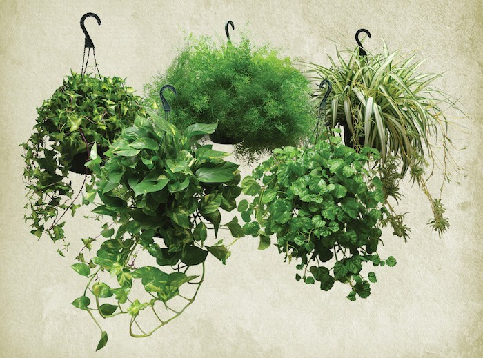 plantes-depolluantes-d-interieur-bureau-chambre-appartement