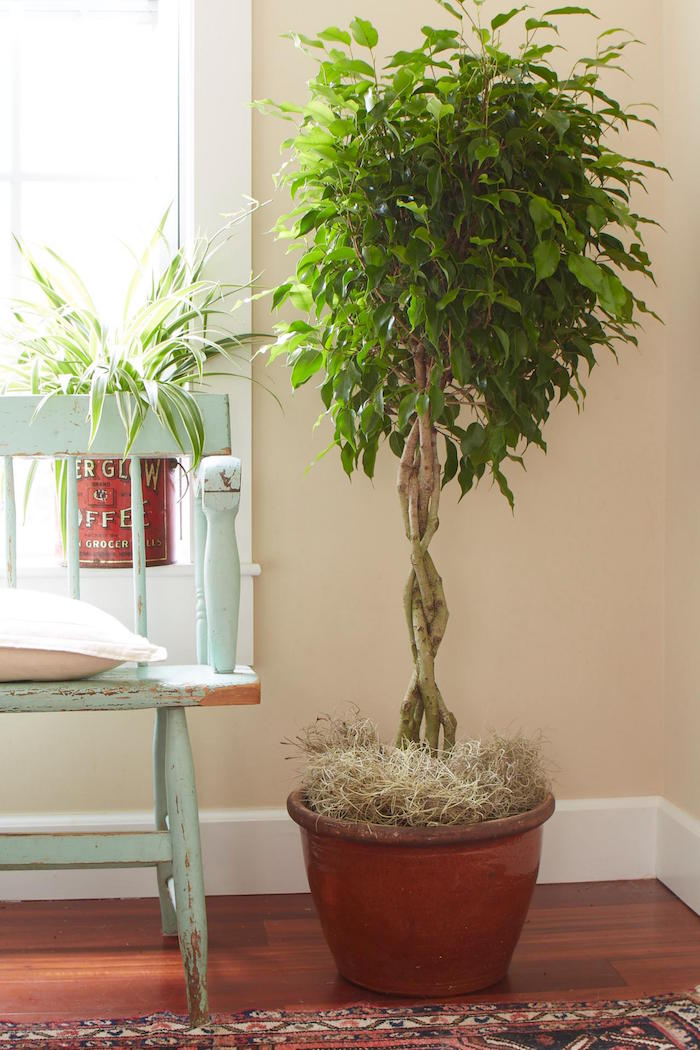 plantes-depolluantes-plante-appartement-d-interieur-depolluante