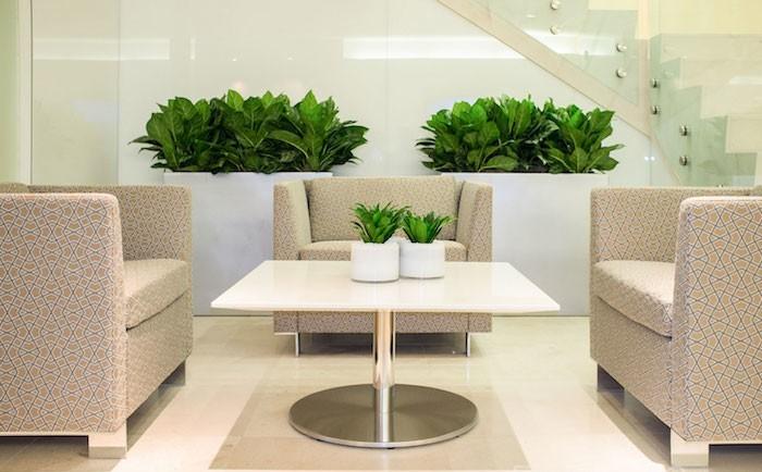 plantes-detoxifiantes-aglaonema-plantepurifiante-interieur-salon-appartement