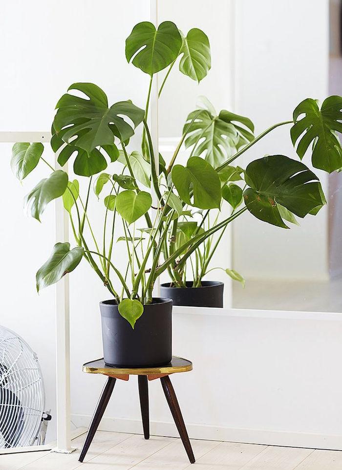 plantes-detoxifiantes-plante-anti-pollution-depolluantes-interieur-philodendron