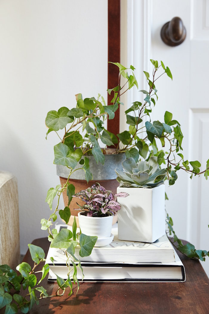 plantes-detoxifiantes-plante-anti-pollution-purifiante-assainissante