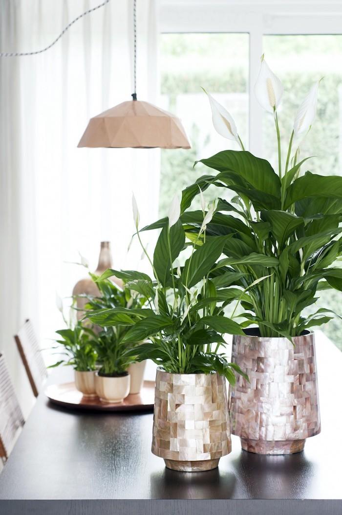 plantes-detoxifiantes-spathiphyllum-plante-depolluante-pollution-interieur-assainir