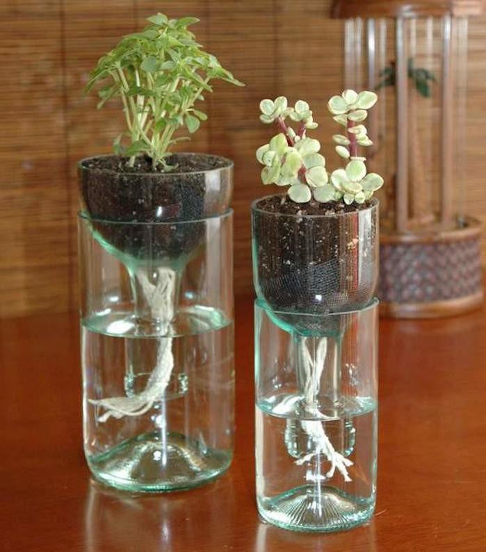 plantes-pour-aquarium-plante-interium-petit-jardin-aquatique