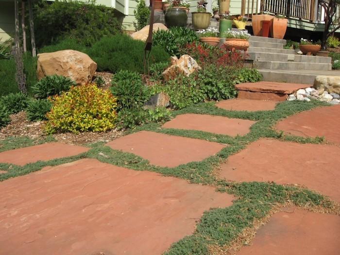 plantes-rampantes-plante-couvre-sol-allee-chemin-passage