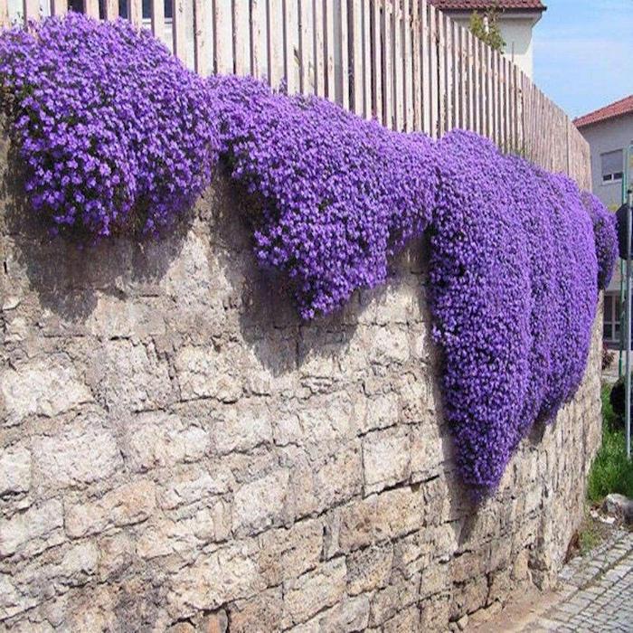plantes-tapissantes-fleurs-tombantes-couvre-sol-mur