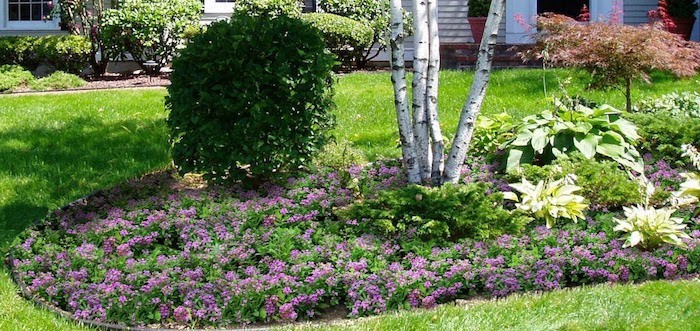 plantes-tapissantes-plante-couvre-sol-pour-talus