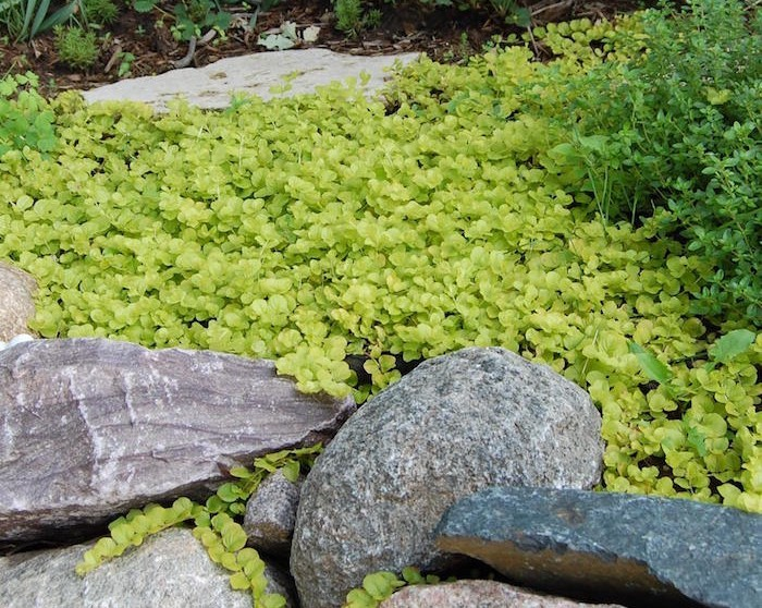 plante couvre sol un tableau de couleurs naturelles dans votre jardin. Black Bedroom Furniture Sets. Home Design Ideas