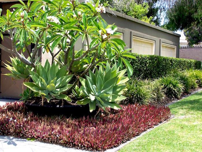 plante couvre sol un tableau de couleurs naturelles dans votre jardin