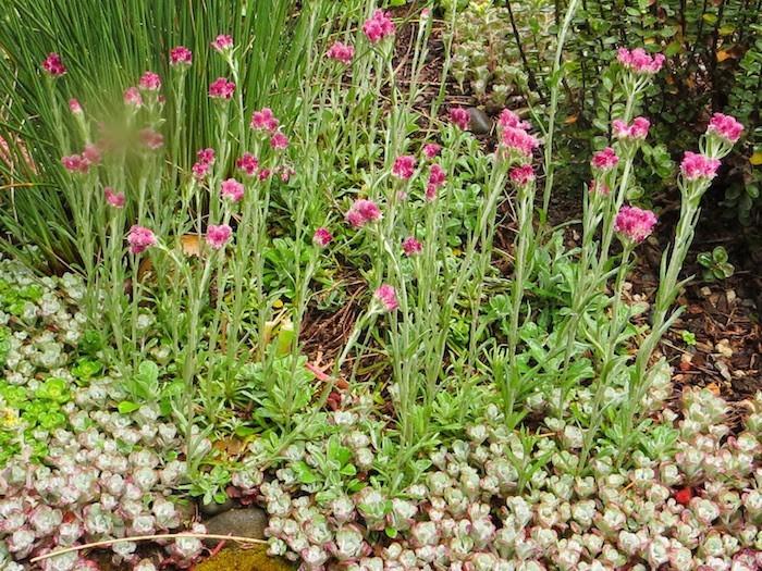 plantes-vivaces-couvre-sol-plantes-pour-talus