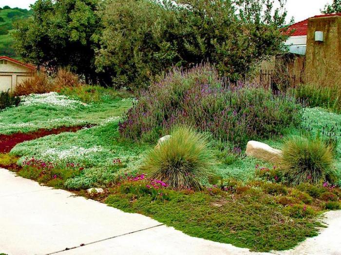 plantes-vivaces-couvre-sol-talus-rampantes