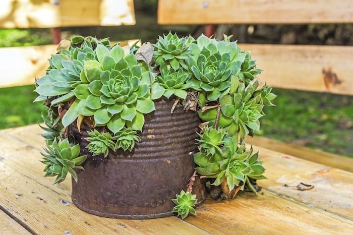 pot-plante-succulent-grasse-exterieur-joubarbes
