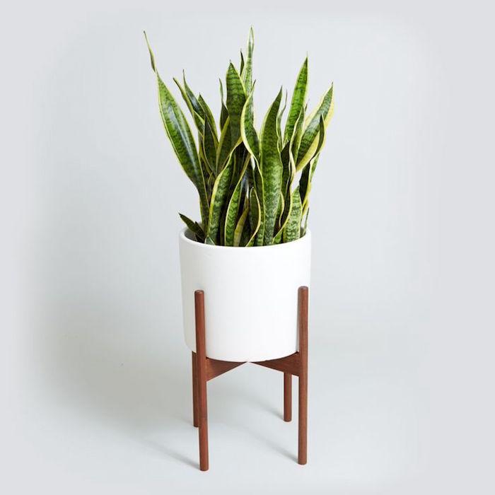 sanseviere-plantes-detoxifiantes-plante-interieur-depolluante-assainissante
