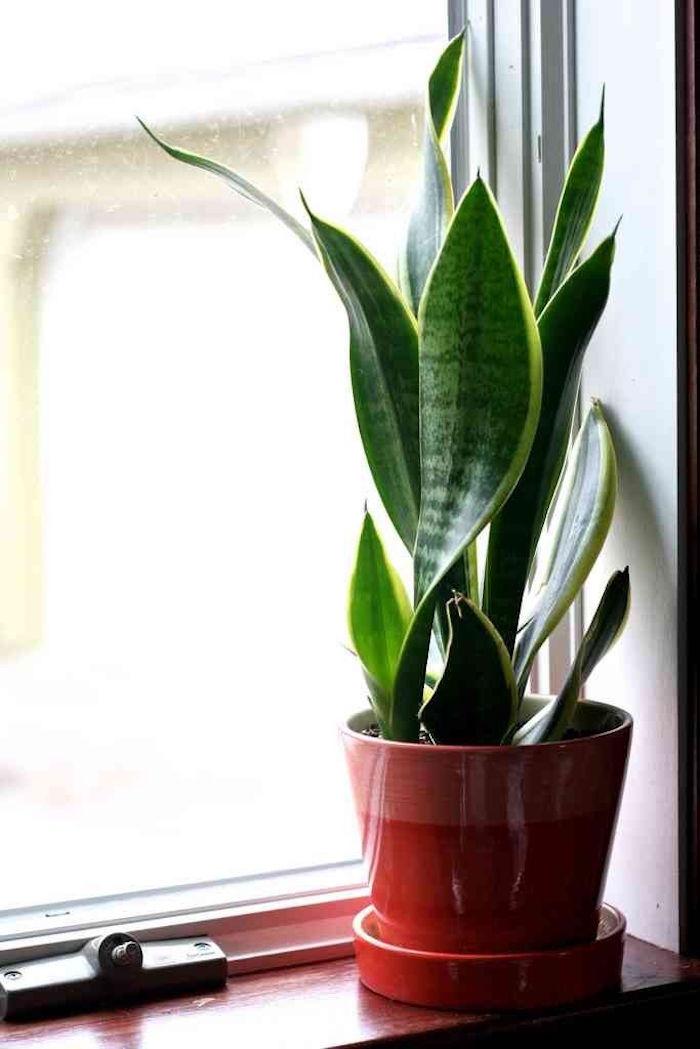 sanseviere-pot-rouge-plantes-depolluantes-appartement-bureau-purifier-air