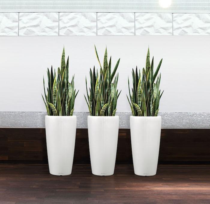 sanseviere-pour-purifier-bureau-assainir-air-pollution-interieur