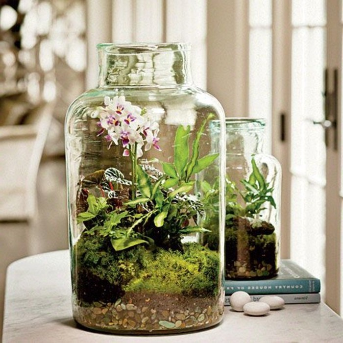superbe-idee-de-jardin-miniature-dans-un-gros-receipeint-en-verre-superbe-orchidee-rose