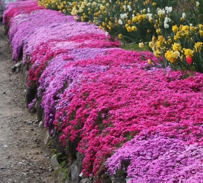 tapis-jardin-japonais-oeillets-japon-tapissant