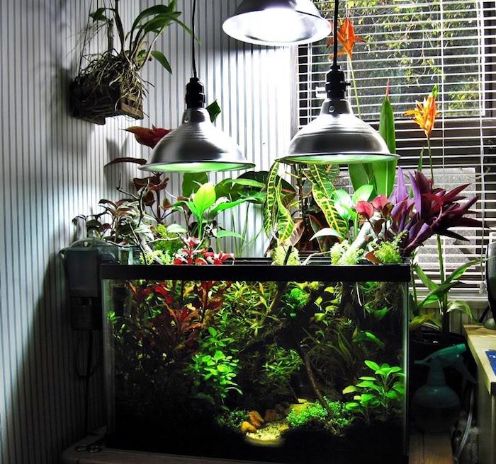 terrarium-aquarium-plante-aquatique-bassin-interieur