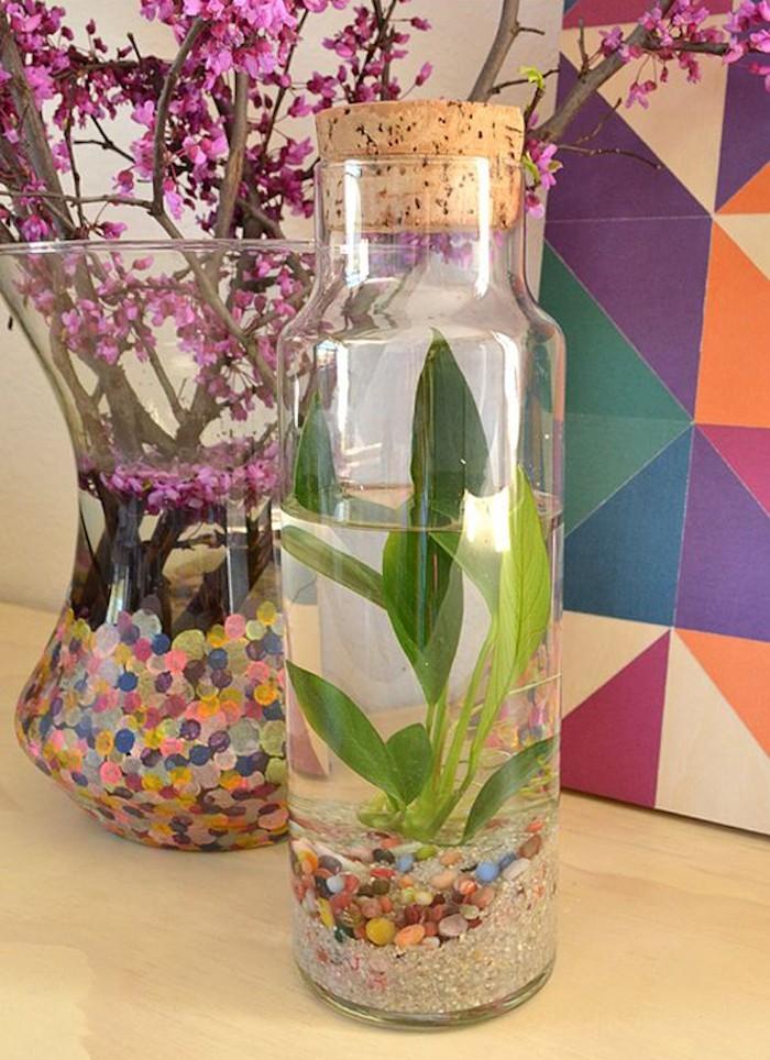 terrarium-bassin-aquatiqueplante-aquarium-interium-bocal-eau