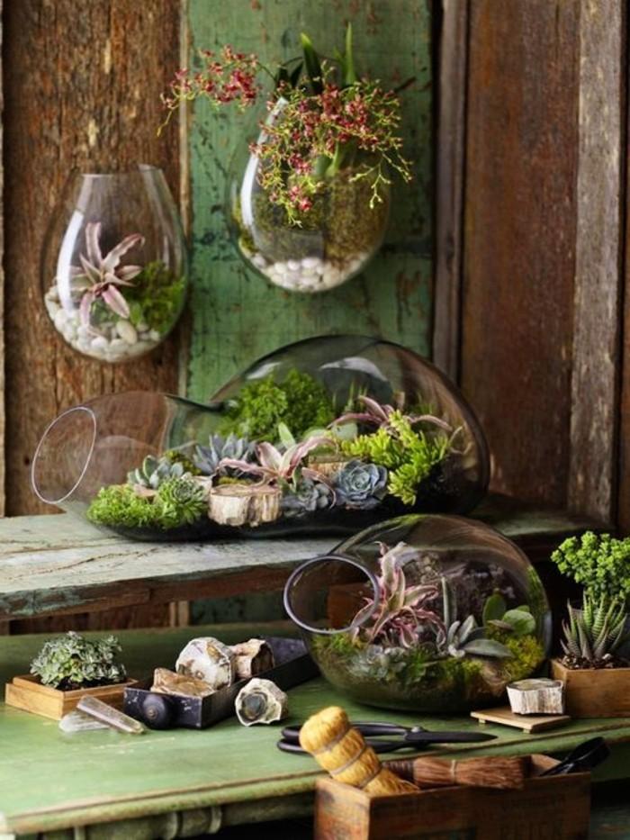 terrarium-tropical-quelques-idee-comment-le-creer-et-amenager