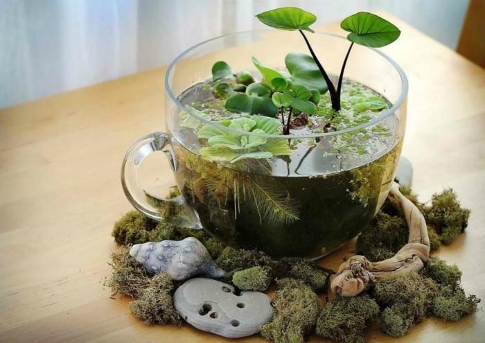 un-mini-jardin-d-eau-place-dans-uneenorme-tasse-en-verre-suggestion-terrarium-tropical-magnifique