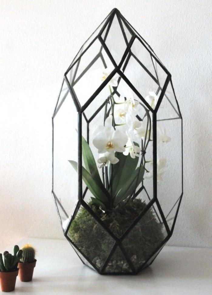 une-belle-orchidee-plantee-dans-un-terrarium-plante-en-verre