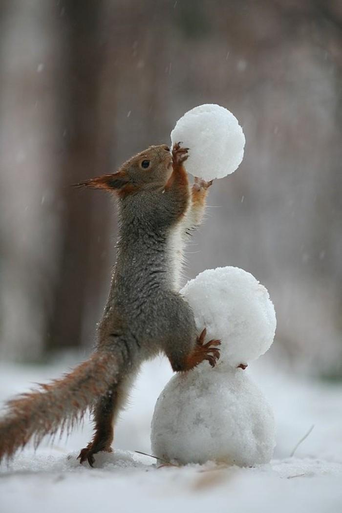 activite-bonhomme-de-neige-hiver-noel-bonhome
