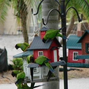 Mangeoire pour oiseaux - 60 modèles et idées DIY