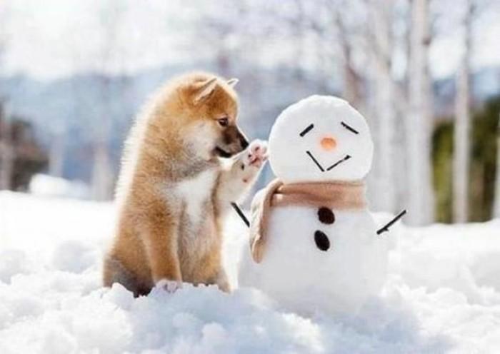creer-un-bonhomme-avec-son-chien-fabriquer-un-bonhomme-de-neige-cool-idee