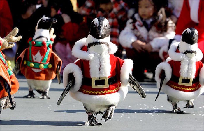 deguisement-pere-noel-animal-rigolo-pinguins