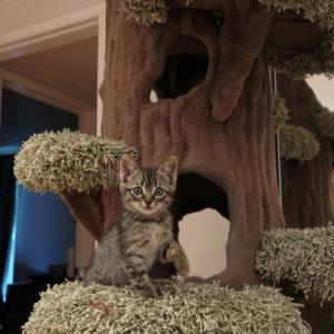 L'arbre à chat - un terrain d'aventures et de repos pour votre ami