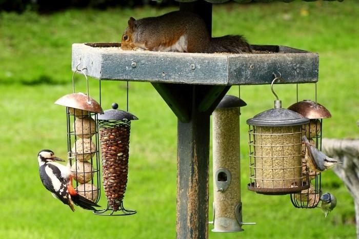 mangeoire-pour-oiseaux-ecureil-amour-vers-la-nature