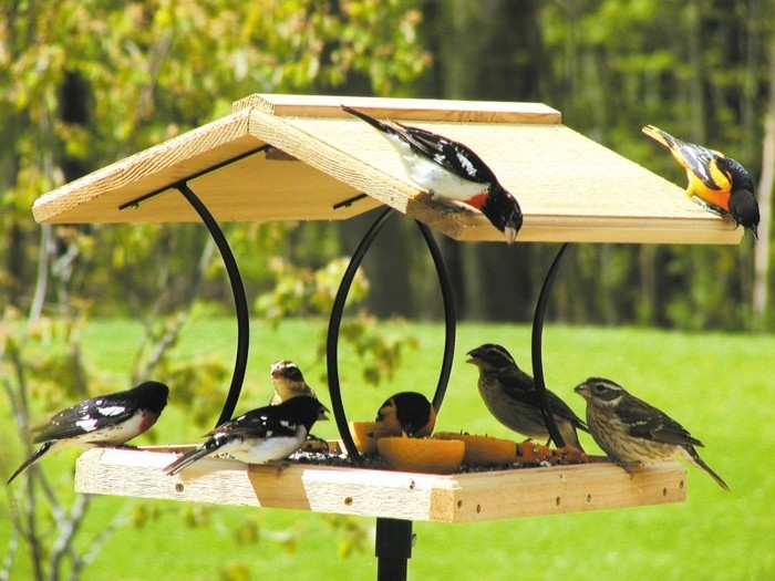mangeoire-pour-oiseaux-en-bois-auvent-decoratif-oiseaux-heureux