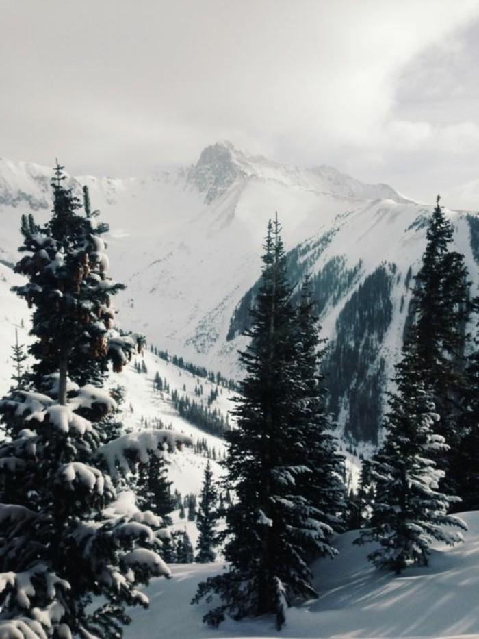 fonds-d-écran-hiver-nature-sauvage-brume-de-matin-paysage-enneigé
