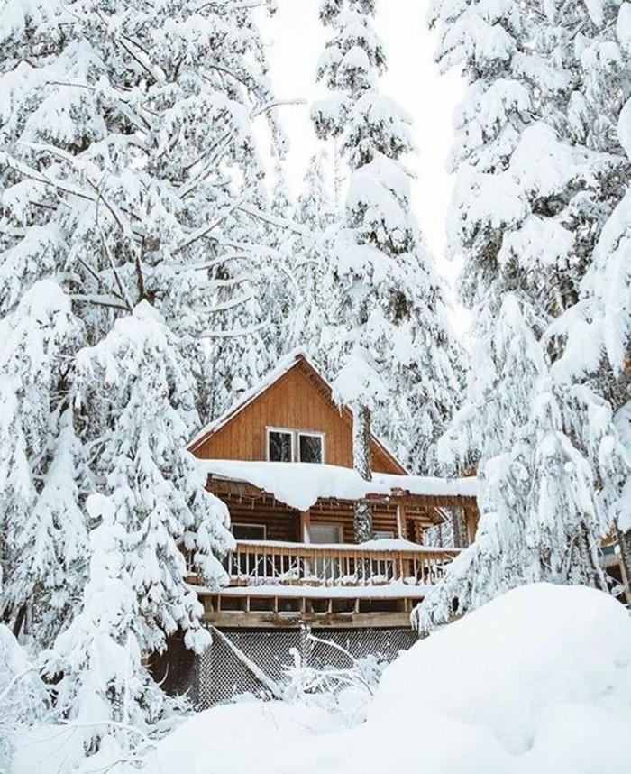 hauteur-neige-cabine-en-bois-dans-la-foret-sapins-enneigés