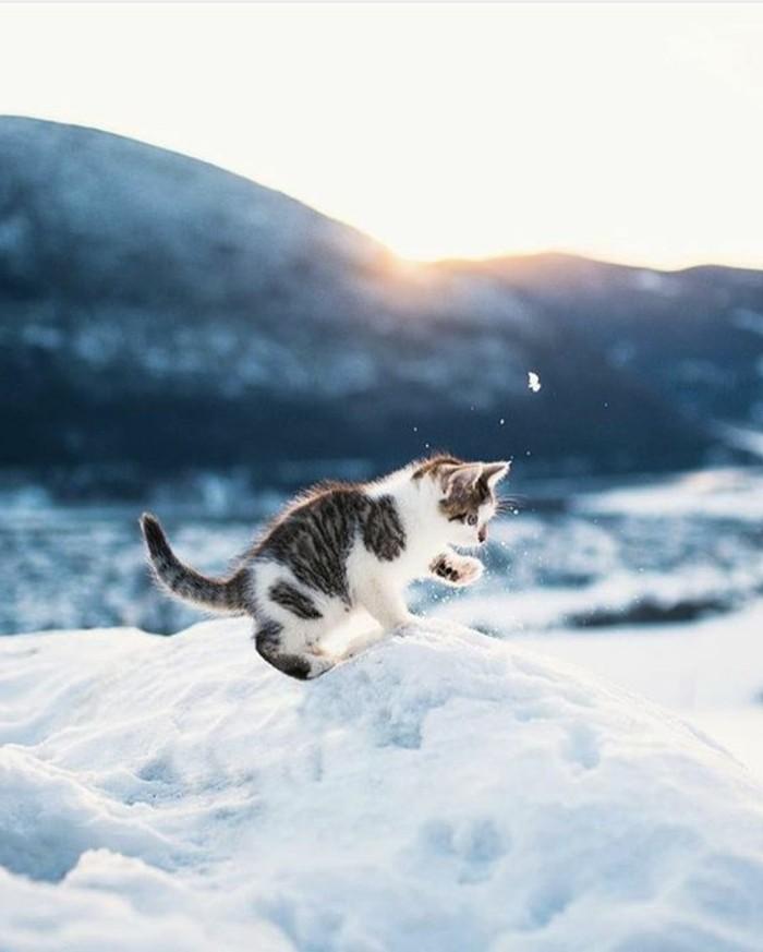 hauteur-neige-le-chat-qui-s'amuse-bien-sur-le-neige-nature-d'hiver-lever-de-soleil