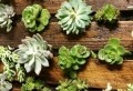 Le mur végétal en palette – idées originales pour un jardin vertical récup