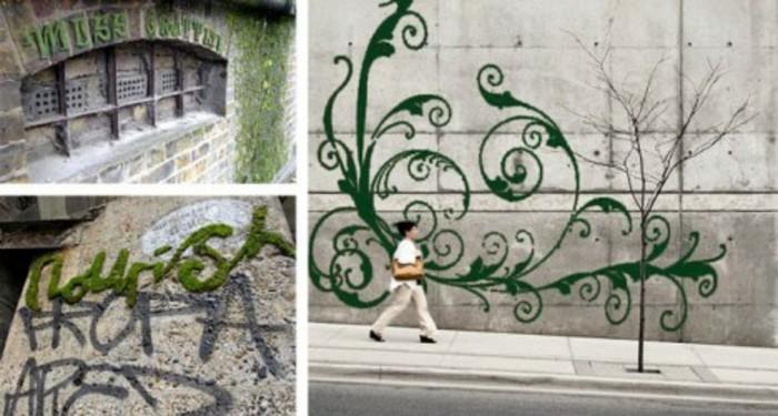 graffiti-végétal-faire-pousser-de-la-mousse-végétale-dans-les-villes