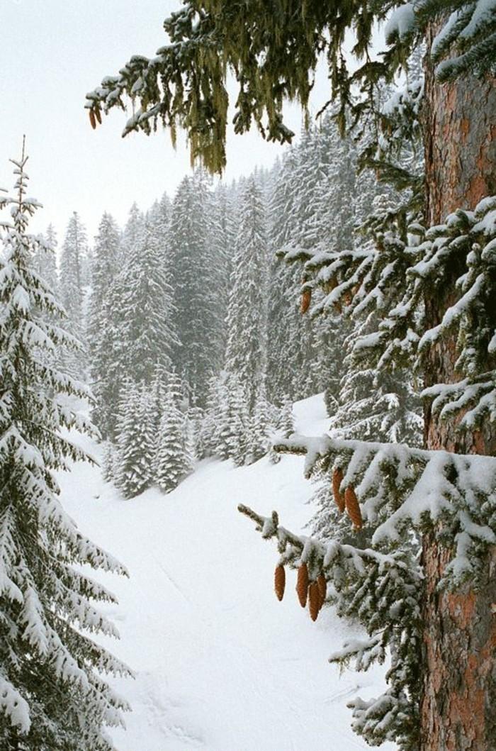paysage-montagne-neige-nature-sapins-pommes-de-pin-neige