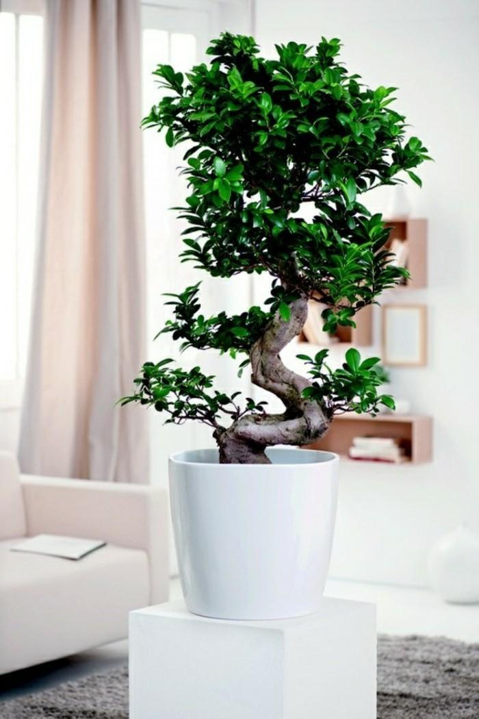 feng shui facile, plante verte, pot à fleur blanc, tapis gris, canapé pastel
